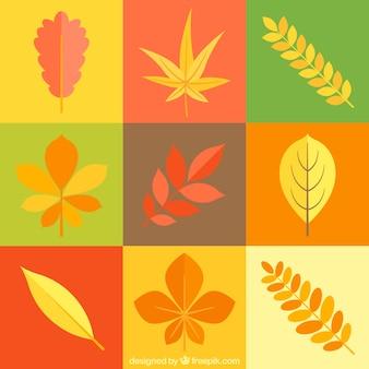 Красочные квадраты с различными типами растений
