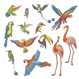 白い背景に手で描かれたカラフルなテクスチャスケッチセット。明るくエキゾチックな熱帯の鳥のコレクション。孤立したアウトラインイラストさまざまなフラミンゴ、オウム、ハチドリ。