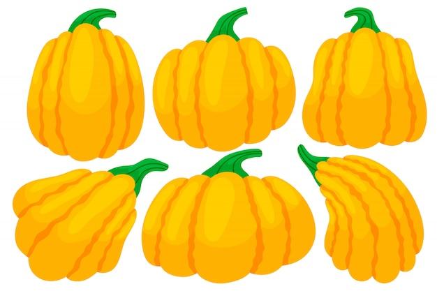 Colorful thanksgiving pumpkins.
