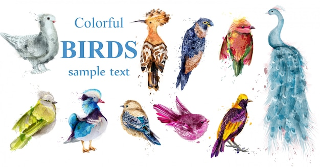 Colorful tropic birds watercolor collection