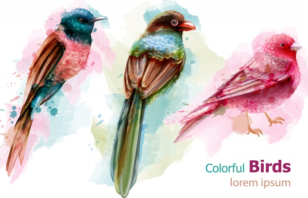 Colorful tropic birds watercolor