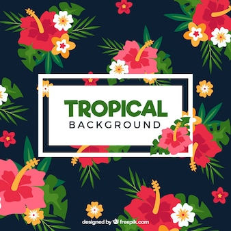 Colorful tropical background with flat design