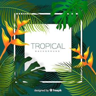Colorful tropical background with leaves and frame