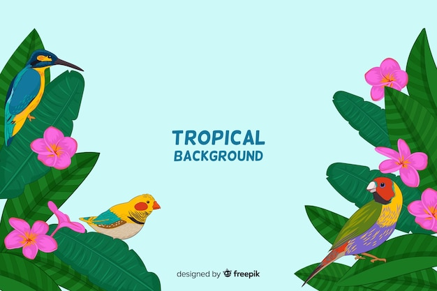 Colorful tropical birds background