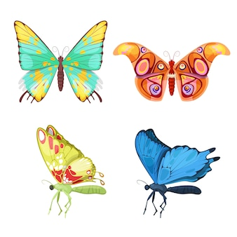 Colorful tropical butterflies insect set.