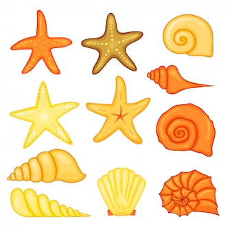 Colorful tropical shells underwater set of sea shells, vector illustration