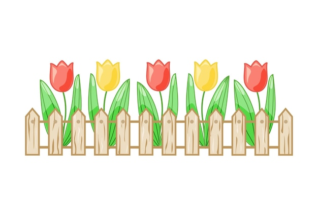 Colorful tulips in a flower bed behind a fence on a white isolated background. vector.