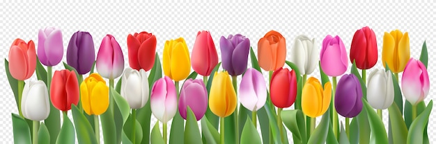 Colorful tulips, photorealistic spring flowers.