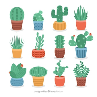 Colorful variety of tropical cactus