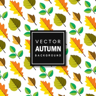Colorful vector autum leaves background