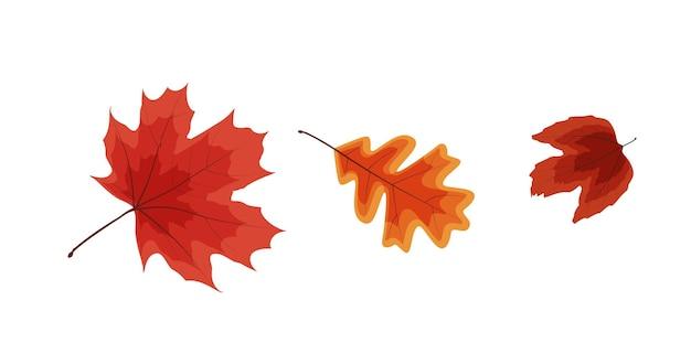 Красочные яркие осенние падающие листья