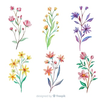 Colorful watercolor floral branch collection