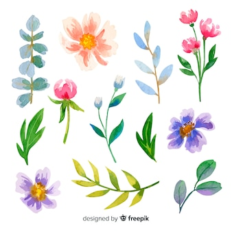 Colorful watercolor flowers and leaves