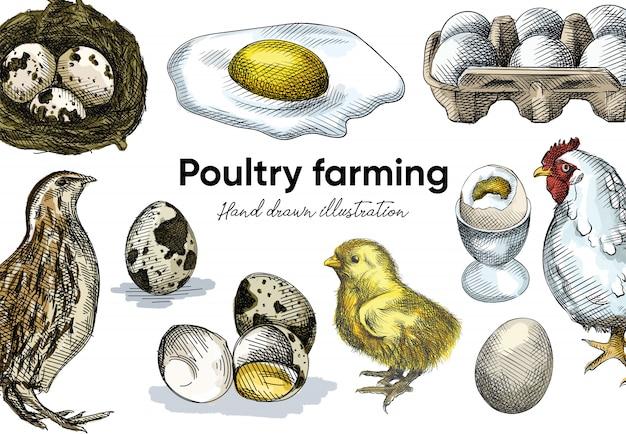 カラフルな水彩ウズラセットの手描きのスケッチ。セットはウズラ、ウズラの卵、巣の中のウズラの卵で構成されています