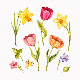 Colorful watercolor spring flower collection