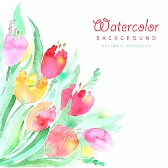 カラフルな水彩チューリップの背景