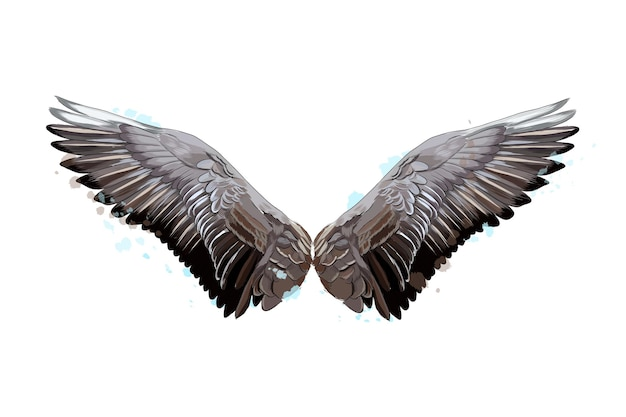 Colorful wings from a splash of watercolor colored drawing vector illustration of paints