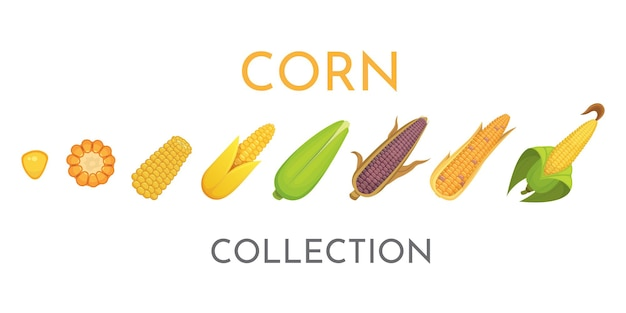 Colorful yellow corns in different styles  illustration. fresh cartoon organic corn vegetable and corny grains.