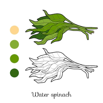 Coloring book for children, plant water spinach