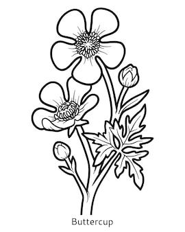 아이들을 위한 색칠하기 책, 꽃 미나리