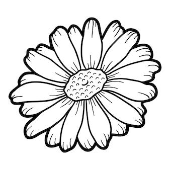 子供のための塗り絵、花カモミール