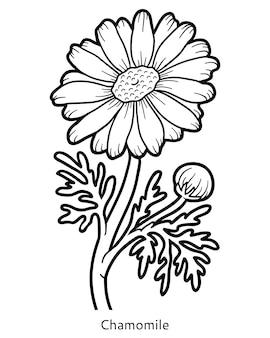 아이들을 위한 색칠하기 책, 꽃 카모마일