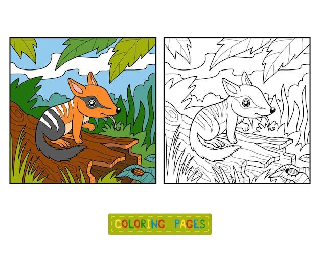 Книжка-раскраска для детей, нумбат и фон