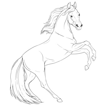 Coloring book with horse. black and white outline. vector isolated illustration.