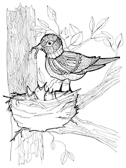 Coloring page with birds drawing