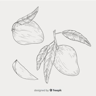 Colorless hand drawn mango background
