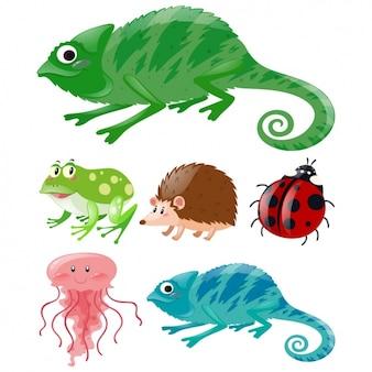Коллекция животных цветное