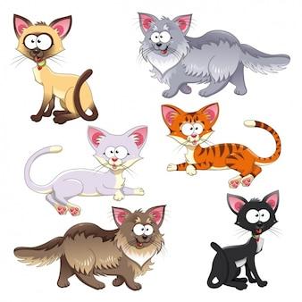 Gatti insieme colorato