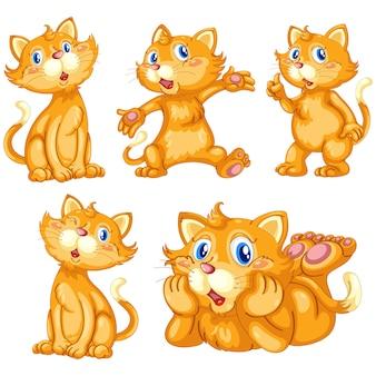 Коллекция цветное кошек