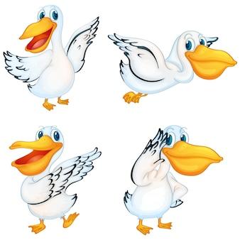 Цветное пеликаны коллекция