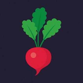 Coloured radish design