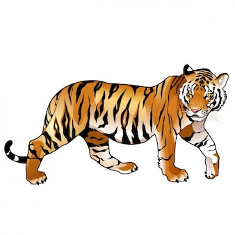Coloured tiger design