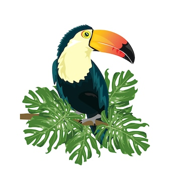 Coloured toucan design
