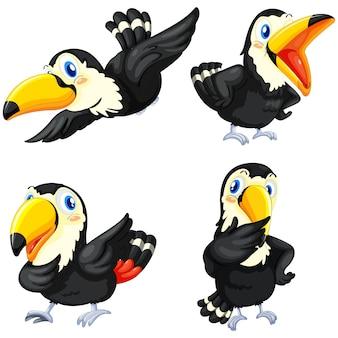 Coloured toucans collection