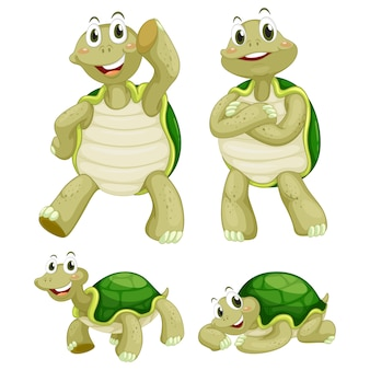 Coloured turtles collection