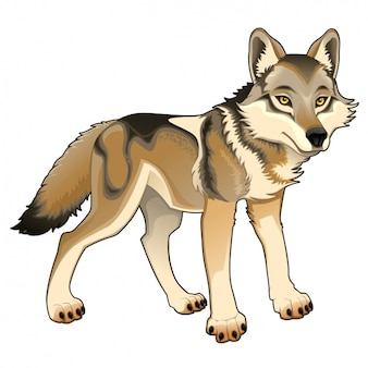 Coloured wolf design