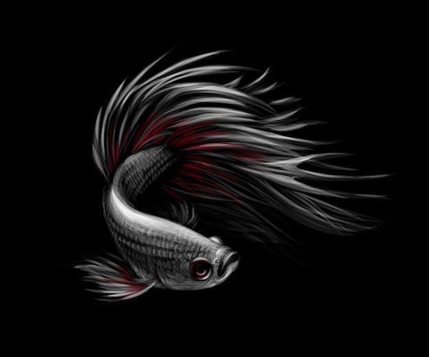 Красочная рыба бетта, сиамские боевые рыбы в движении, изолированные на черном фоне. векторная иллюстрация
