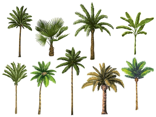 Colourful hand drawn palm tree. retro tropical coconut trees, vintage miami palms illustration set.