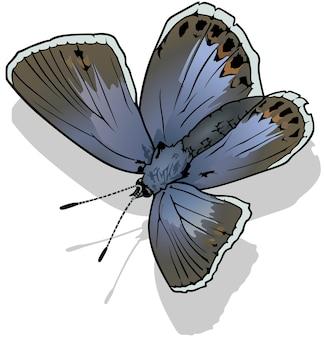 Обыкновенная синяя бабочка polyommatus icarus