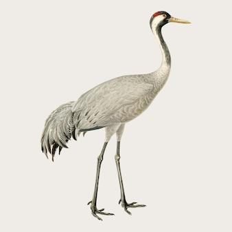 Disegno dell'annata di vettore dell'uccello della gru comune