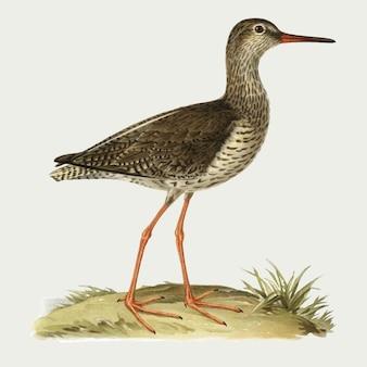Uccello della pettegola comune in stile disegnato a mano
