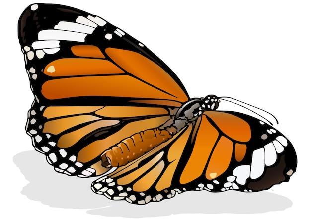 Обыкновенная тигровая бабочка danaus genutia