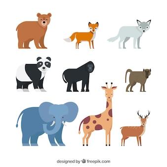 平らなデザインの野生動物の完全なパック