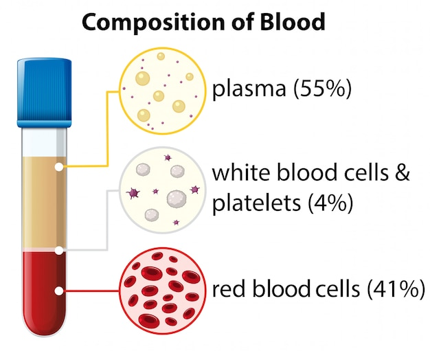 Composition of blood diagram