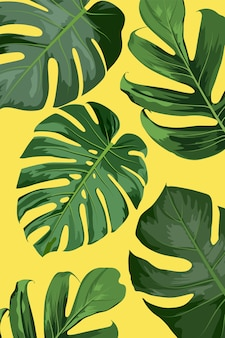 Composition of monstera leaves