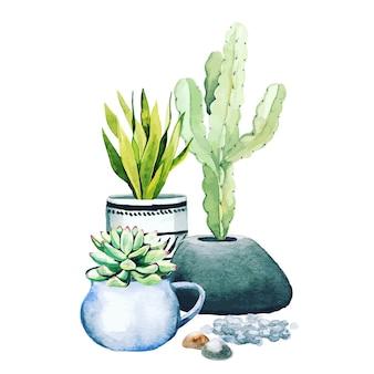 화분에 심은 선인장 식물과 다육 식물의 구성